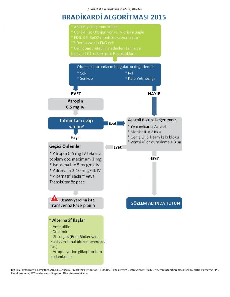 ERC 2015 Bradikardi Algoritması Türkçe
